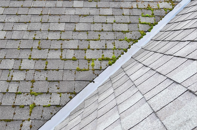 repair-leaking-roof-moss